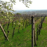 Photo taken at Vineyards Godinov majer by Ivan V. on 4/21/2013