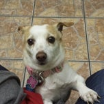 Photo taken at Vanguard Veterinary Clinic by Sandy G. on 3/31/2014