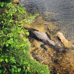 Photo taken at Big Cypress Oasis Visitor Center by Grant S. on 5/11/2013
