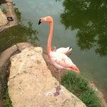 Photo taken at Abilene Zoo by Bobby M. on 6/8/2013