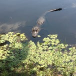Photo taken at Gator Nation by Debbie J. on 9/23/2012