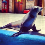 Photo taken at Sea Lion and Otter Stadium by Zoe C. on 6/20/2012