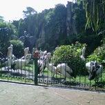 Photo taken at Kebun Binatang Ragunan by Diah S. on 1/27/2013