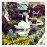 Photo taken at Bellagio Conservatory & Botanical Gardens by Maggie F. on 4/26/2013