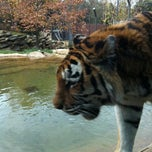 Photo taken at Philadelphia Zoo by Caroline L. on 11/6/2012