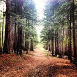 Photo taken at Big Basin Redwoods State Park by Joseph A. on 3/2/2013