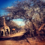 Photo taken at Maqueda Lodge Marloth Park by GlynnЯyan on 8/3/2013