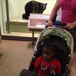 Photo taken at The Kenneth E. Behring Family Hall of Mammals by Kevin G. on 6/1/2014
