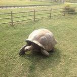 Photo taken at Tulsa Zoo by Honey Lani on 8/17/2012