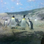 Photo taken at Penguin House at Riverbanks Zoo by Adam L. on 9/4/2011