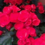 Photo taken at Dolin's Garden Center by Tess B. on 3/27/2011