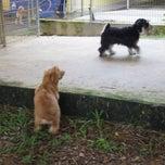 Photo taken at Pet Movers @ Pasir Ris Dog Run by Momo H. on 9/4/2011