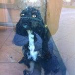 Photo taken at Waikiki Dog Grooming by Keiko on 6/2/2012