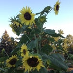 Photo taken at Cox Arboretum MetroPark by Sarah M. on 8/7/2012