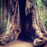 Photo taken at Big Basin Redwoods State Park by Bruce C. on 3/14/2012