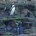 Photo taken at Penguin Exhibit - Woodland Park Zoo by Martha F. on 2/4/2012