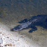 Photo taken at Big Cypress National Preserve by E.D. C. on 3/31/2012