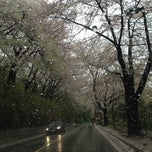 Photo taken at Walkerhill 산책길 by Jung eun M. on 4/21/2012
