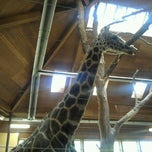 Photo taken at Giraffe House by Jennifer D. on 4/10/2012