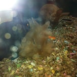 Photo taken at Super Pets by Elizabeth H. on 6/10/2012