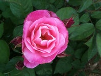 Cover Photo for P Gouw's map collection, Places I Want To Try