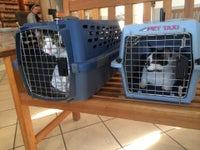 Treehouse Animal Clinic