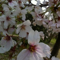 Photo taken at 丹後堰公園 by Zappa P. on 4/13/2012