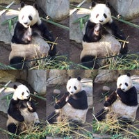 Photo taken at Giant Panda Research Station by Chris L. on 2/8/2016