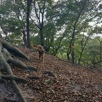 Photo taken at Belmonte Arboretum by Marike v. on 10/4/2016