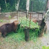 Photo taken at Gramado Zoo by Lucas B. on 6/1/2013