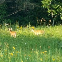 Photo taken at Lapham Peak Unit, Kettle Moraine State Forest by Daniel on 8/3/2016