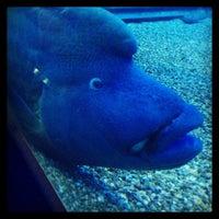 Photo taken at Osaka Aquarium Kaiyukan by esctype2 出. on 6/9/2013