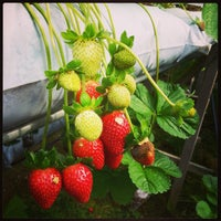 Photo taken at Genting Strawberry Leisure Farm by Fran L. on 2/23/2013