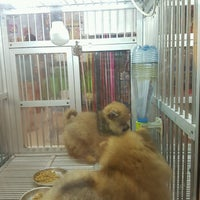 Photo taken at Zoo Pet shop Mall Of Indonesia by Vica S. on 8/7/2016