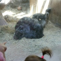 Photo taken at Great Ape House at the National Zoo by Juli J. on 6/27/2016