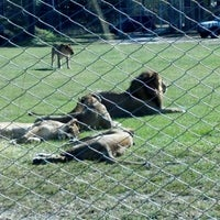 Photo taken at Lion Country Safari by Chad M. on 12/22/2012