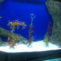 Photo taken at Underwater World And Dolphin Lagoon by Aditya D. on 10/1/2012