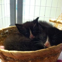 Photo taken at Animal rescue Inc by Wendy P. on 6/13/2014
