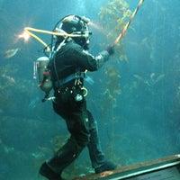 Photo taken at Monterey Bay Aquarium by Anton D. on 1/10/2013