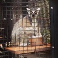 Photo taken at Duke Lemur Center by Nick P. on 4/12/2013