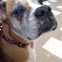 Photo taken at Animal Eye Specialists by Tiffany W. on 5/2/2014