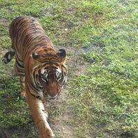 Photo taken at Maharajah Jungle Trek by Jake Z. on 12/28/2012