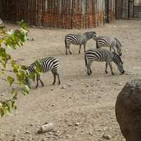 Photo taken at ABQ BioPark Zoo by Jonathan S. on 11/21/2012