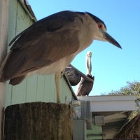 Photo taken at Seaside Seabird Sanctuary by Patricia M. on 11/22/2012