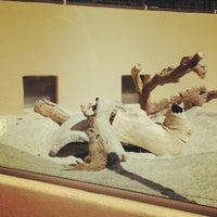 Photo taken at The Living Desert Zoo & Botanical Gardens by e*starLA on 3/5/2013