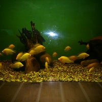 Photo taken at Government Aquarium, Cubbon Park by Harish A. on 10/20/2013