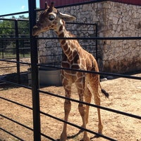 Photo taken at Natural Bridge Wildlife Ranch by Tina E. on 9/22/2013