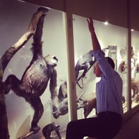 Photo taken at Harvard Museum of Natural History by Capsun P. on 6/7/2012