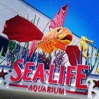 Photo taken at SEA LIFE Aquarium by Melissa L. on 6/23/2012