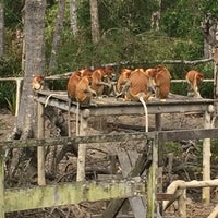 Photo taken at Labuk Bay Proboscis Monkey Sanctuary by Анна А. on 4/18/2016